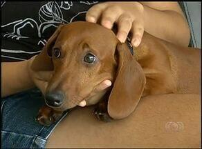 Cachorros com desidratação precisam ser internados em Araguaína - Cachorros com desidratação precisam ser internados em Araguaína