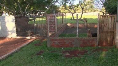 Associação Iguaçuense de Proteção aos Animais precisa de ajuda - Como não recebe verba governamental, a entidade precisa da colaboração da população para reformar os canis que abrigam animais recolhidos nas ruas.