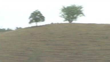 Seca provoca prejuízo para pecuaristas de Alegre, no Sul do ES - Pastos da região estão secos e o gado não tem comido a quantidade que precisa. Produção de leite caiu cerca de 30%.