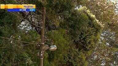 Árvore cai em cima de casa e mata mulher em Gramado, RS - O caso traz à tona debate sobre quando é possível derrubar árvores que oferecem riscos.