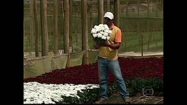 Produtores de flores de SP começam distribuição para Dia de Finados - Produtores de flores de São Paulo trabalham em ritmo acelerado para atender os pedidos para o Dia de Finados, no dia 2 de novembro. A venda foi antecipada e eles já começam a entregar os vasos e ramalhetes.