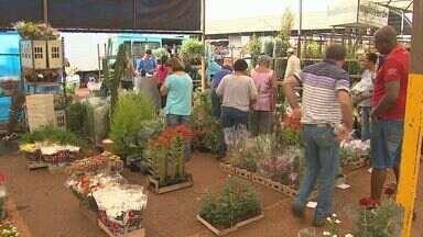 Comerciantes estão animados com venda de flores no feriado de Finados - Com seca prolongada, preço subiu 10% na Ceagesp em Ribeirão Preto.