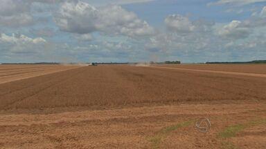 Produtor está de olho nas oscilações do dólar - Agricultores de Mato Grosso estão atentos ao sobe e desce cambial, que interfere diretamente nos custos. Veja o que fala o Imea sobre o assunto.