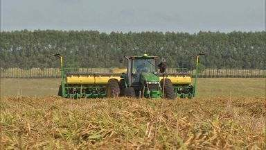 Produtores aproveitam chuva para acelerar o plantio da soja - A estiagem prolongada provocou mudanças no planejamento do plantio. Com o atraso, o cultivo do milho safrinha teve que ser cancelado em algumas fazendas de MS