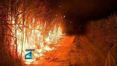 Queimadas em plantações de cana de açúcar começam a ser substituídas pela mecanização - Mudança está prevista na legislação e deve gerar demissões.