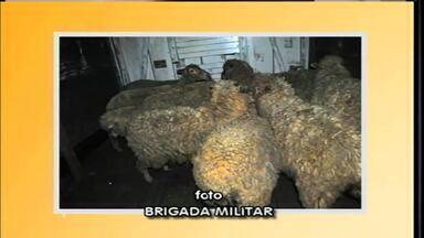 Dois homens são presos por furtarem ovelhas de propriedade - Pelo menos 16 animais foram levadas, mas só 11 recuperadas.
