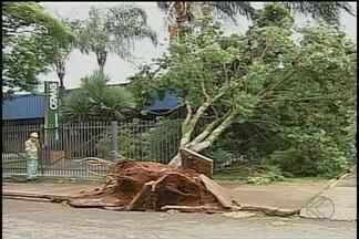 Funcionários da Prefeitura de Patos de Minas limpam ruas após vendaval na cidade - Vento forte derrubou árvores e destelhou casas.
