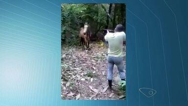 Homem é intimado após aparecer em vídeo atirando em égua, no ES - Cerca de três milhões de pessoas já viram o vídeo.Homem alega que executou a égua porque ela estava doente.