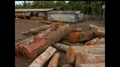 Ibama fecha madeireira ilegal em Mojuí dos Campos, PA - Operação é realziada desde setembro na região. O material encontrado na empresa não tinha documentação.