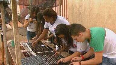Alunos de uma escola em Descalvado produzem alimentos que vai para merenda - Alunos de uma escola em Descalvado produzem alimentos que vai para merenda.