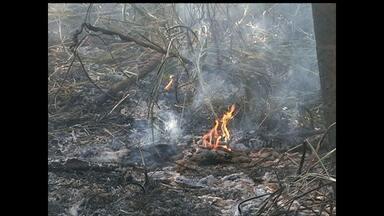 Incêndio atinge mata próximo a casas em Santarém, PA - Moradores passaram mal devido a fumaça. Bombeiros suspeitam que fogo iniciou em terreno próximo ao local.