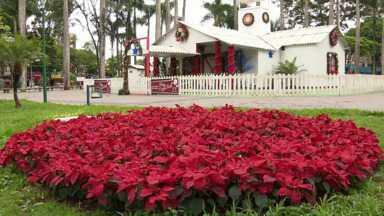 Enfeites de natal estão sendo furtados em Maringá - A prefeitura colocou a decoração de natal há menos de uma semana, e muitos vasos de plantas já sumiram.