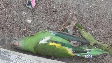 Polícia investiga morte de 200 periquitos em Manaus - Aves foram encontradas mortas em frente a condomínio de luxo.