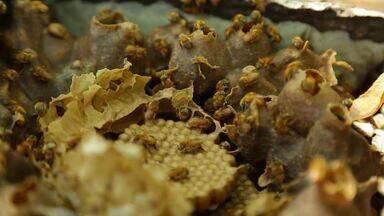 Expedição Terra: Apicultura - Max viaja até o Tocantins para mostrar um projeto de criação de abelhas
