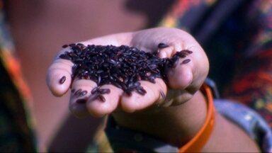 Instituto Atá valoriza a produção de ingredientes nacionais - A iniciativa criada pelo chef Alex Atala enaltece o trabalho de agricultores