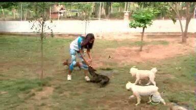 Hoteis para cachorros ficam lotados no período de festas - Hoteis para cachorros ficam lotados no período de festas