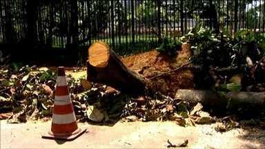Quase 600 árvores já caíram em São Paulo desde segunda-feira (29) - A cidade amanheceu com mais árvores no chão. Um vendaval que passou por São Paulo nessa madrugada com ventos de até 44 km/h. Foi o segundo vendaval na capital paulista essa semana.