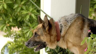 Qual cachorro deve vencer na categoria Melhor Astro de Quatro Patas? - Fulano ou Federal? Vote no prêmio Vídeo Show de Melhores do Ano 2014