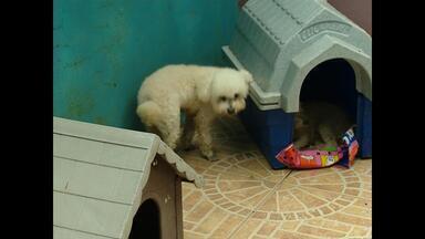 Abandono de animais cresce na época de férias em Santa Maria, RS - Alguns grupos de proteção tentam acolher os animais que são abandonados.