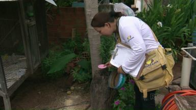 Agentes da dengue começam a fazer o levantamento do índice de infestação em Umuarama - O resultado deve sair na sexta-feira.
