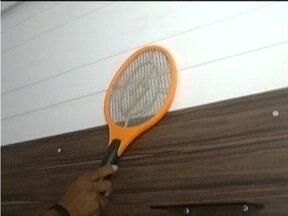 Muriçocas incomodam os moradores do Leste de Minas - No tempo quente o número de insetos aumenta.