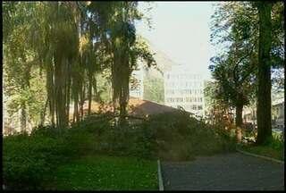 Começa a poda dos eucaliptos em praça de Nova Friburgo, RJ - Primeiras árvores podadas e cortadas ficam próximas à rodoviária.
