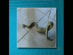 Cascavel aparece no portão de casa - Um morador do conjunto São Lourenço, zona Sul de Londrina, levou um susto ao encontrar a cobra no portão da casa dele.