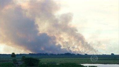 Corumbá (MS) registrou 54 focos de incêndio no mês de janeiro - O mês de janeiro nem acabou e o Pantanal, no MS, já bateu recorde de queimadas. A cidade de Corumbá lidera o ranking nacional de queimadas do instituto Nacional de Pesquisas Espaciais. A situação é atípica para esta época do ano.