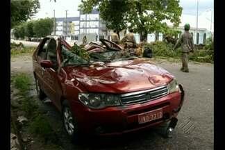 Em Belém, árvore desaba sobre carro no bairro do Marco - Veículo ficou bastante danificado. Por sorte, não havia ninguém no interior do carro no momento do acidente.