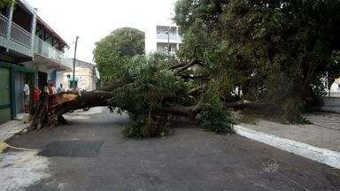 Árvore tomba em praça e atinge poste de energia elétrica na Gentilândia - Equipe da Emlurb e da Coelce estiveram no local.