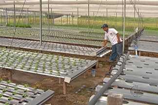 Chuva acima do normal alivia situação de agricultores do Alto Tietê - Uma avaliação realizada no mês de março vai ajudar o Governo Estadual a planejar ações para o setor agrícola.