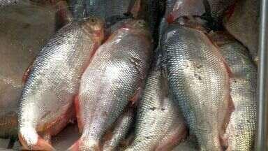 Preço do peixe pode aumentar durante a quaresma em Cuiabá - Preço do peixe pode aumentar durante a quaresma em Cuiabá.