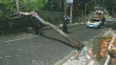 Forte ventania causa estragos em Fortaleza - Ventos chegaram a 54 quilômetros por hora.