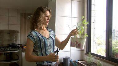 Temperos alimentícios podem ser produzidos em casa, sem agrotóxico e sem conservantes - Confira esta e outras dicas no quadro Mais Saúde.