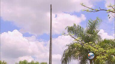 Mudanças provocam mortes de plantas em Ribeirão Preto - Palmeiras foram transferidas de lugar e transporte prejudicou plantas.
