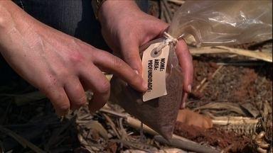 Agrônoma da Embrapa ensina a coletar o solo para análise - Isso não pode ser feito de qualquer jeito, existem algumas dicas que devem ser seguidas.
