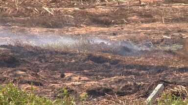 Incêndio em turfa pode ser criminoso, dizem bombeiros do ES - Fogo havia sido controlado pelos bombeiros no domingo (29), mas voltou.Manchas de líquido que pode ser inflamável foram encontradas no terreno.