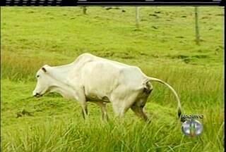 Prefeitura de São Francisco, RJ, decreta estado de emergência - Decreto assinado foi entregue ao Secretário Estadual de Agricultura.
