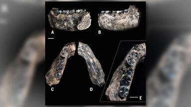 Grupo de cientistas descobriu o mais antigo fóssil da espécie humana - A arcada dentária encontrada por pesquisadores altera os estudos sobre o tempo de existência dos humanos