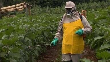 Uso errado de agrotóxico pode comprometer a lavoura - Assunto vem sendo debatido no Ceasa, em Goiânia.