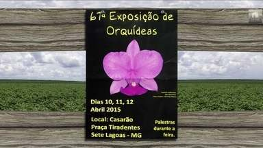 Confira os eventos do setor que acontecem na semana por todo o Brasil - Têm seminários, exposições agropecuárias, festas e muito mais.