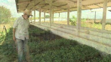 Projeto de arborização pretende plantar 5 mil mudas em Batalha - Para amenizar a temperatura no Sertão alagoano, projeto de arborização pretende plantar 5 mil mudas no município de Batalha.