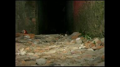Incêndio causa morte de menino em Rio Grande, RS - Bombeiros acreditam que uma vela tenha causado o início do fogo.
