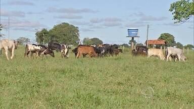 Mais de 90% do imóveis rurais de MS ainda não se inscreveram no Cadastro Ambiental Rural - Termina dia 6 de maio o prazo para os proprietários se cadastrarem. Muitos nem sabiam da existência do sistema