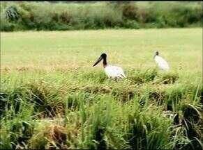 Área de projeto de irrigação vira moradia para animais silvestres; local é preservado - Área de projeto de irrigação vira moradia para animais silvestres; local é preservado