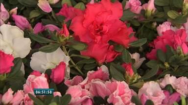 Festival das Flores reúne variedades de plantas ornamentais, na Praça do Ferreira - Mais de 100 espécies de plantas com preços acessíveis estarão até o dia 26 de abril na Praça do Ferreira, no Centro de Fortaleza.