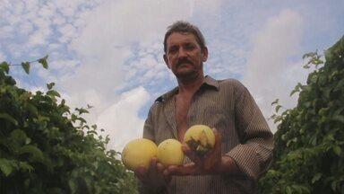Veja 2º episódio da Série 'Polpa de Frutas' - Casal investe na produção de maracujá há 6 meses.