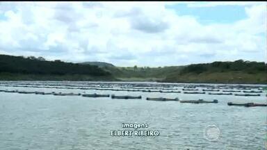 Piscicultores de Bocaina se preocupam com nível da barragem e criação - Piscicultores de Bocaina se preocupam com nível da barragem e criação