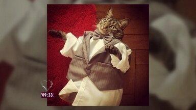 Dona de gato famoso dá dicas de como fotografar seu animal de estimação - Ana Maria pede para telespectadores enviarem fotos de seus pets para o site do Mais Você