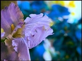 Flores são opção para o Dia das Mães - Esta é a época do ano que mais movimenta as floriculturas.